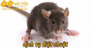 Dịch vụ diệt chuột uy tín